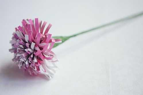 纸花康乃馨制作 母亲节纸艺康乃馨手工纸花的制作图解
